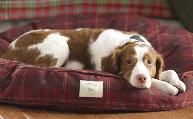 Round Dog Bed, Orvis