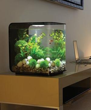 Biorb Flow Aquarium (Also available at Frontgate)